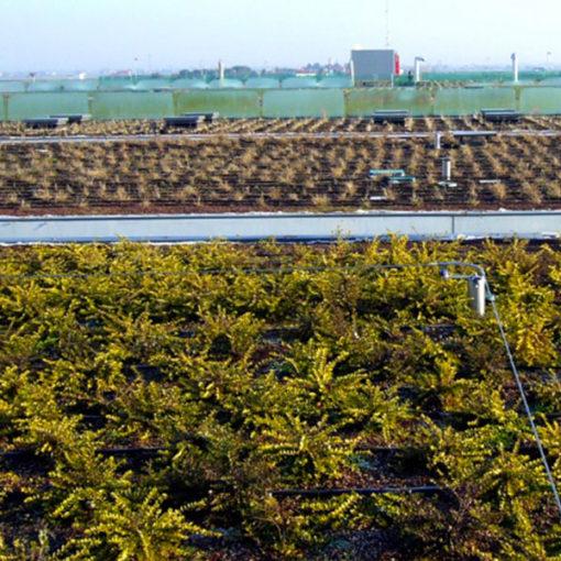 Copertura a verde intensivo Perliroof con vegetazione arbustiva - centro commerciale Jesolo