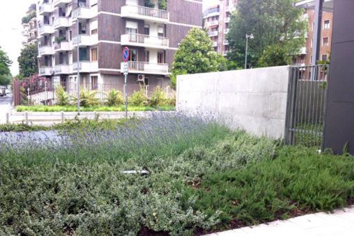 Perliroof giardino pensile intensivo con arbusti - complesso residenziale Milano