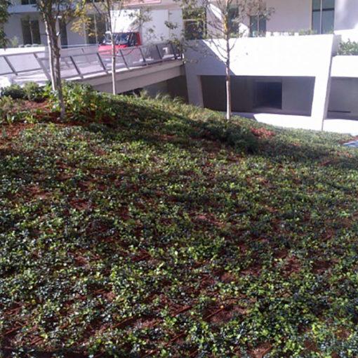Residenze Libeskind - Citylife - Milano - giardini pensili con verde intensivo ad arbusti e piccoli alberi