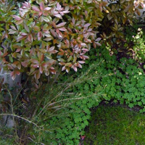 copertura a verde intensivo - sistema Perliroof Perligarden presso abitazione privata - Milano