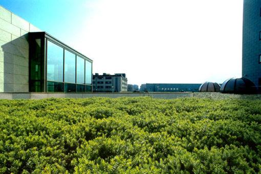 Copertura a verde intensivo Perliroof con piccoli arbusti - centro direzionale - Milano