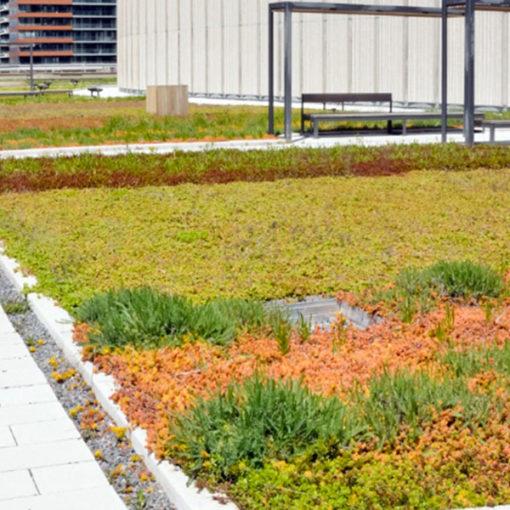 tetto giardino estensivo - vegetazione a sedum e crassulacee - copertura con integrazione di percorsi pedonali