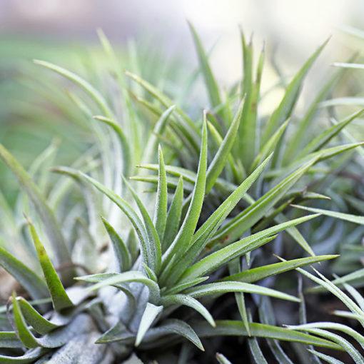 coltivazione di piante ornamentali in vaso - substrato professionale Perliter