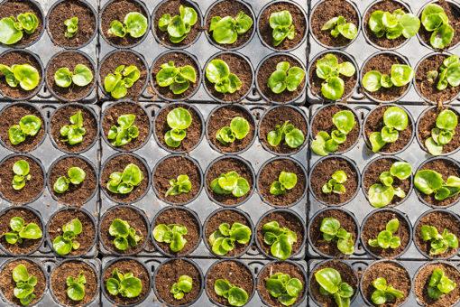 substrato di coltivazione professionale Perliter - miscela cocco torba