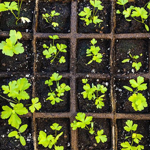 substrato Perliter per la semina in orticoltura