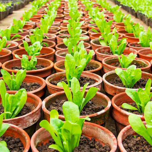 substrato Perliter per la semina in floricoltura