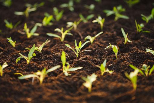semina - substrato di coltivazione Perliter - miscela di perlite, torba acida e cocco