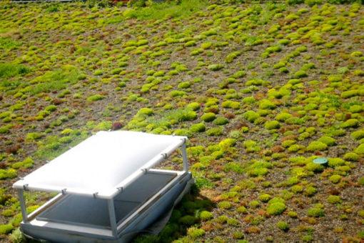 copertura a verde estensivo con vegetazione a sedum - tetto non fruibile di centro commerciale - Aosta