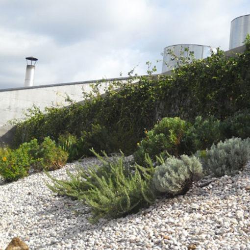 copertura verde con erbacee perenni e tappezzanti - Ospedale di Careggi (FI)