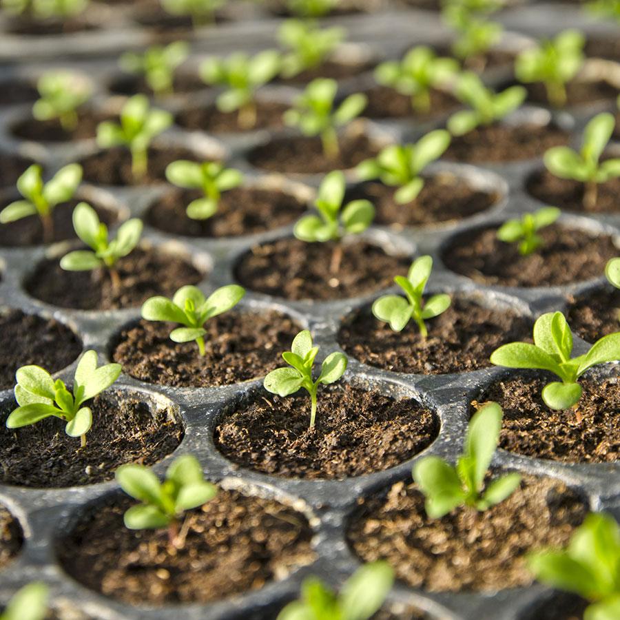 substrati di coltivazione e terricci per semina di piantine