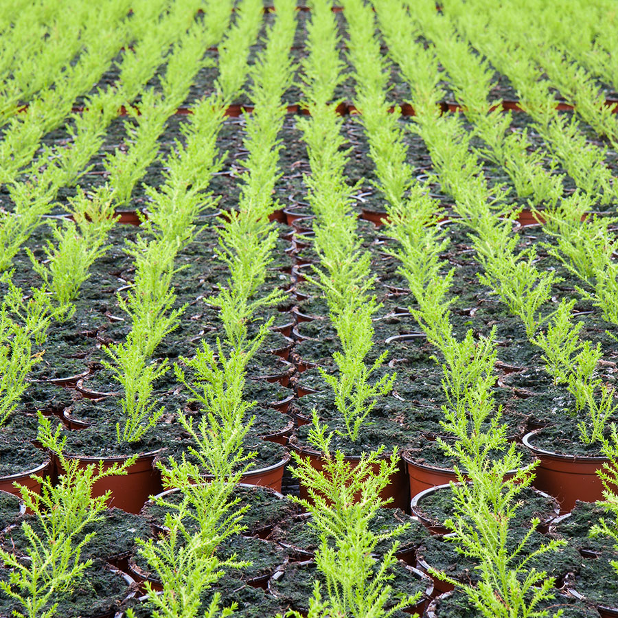 substrati di coltivazione e terricci per taleaggio di specie ortoflorovivaistiche