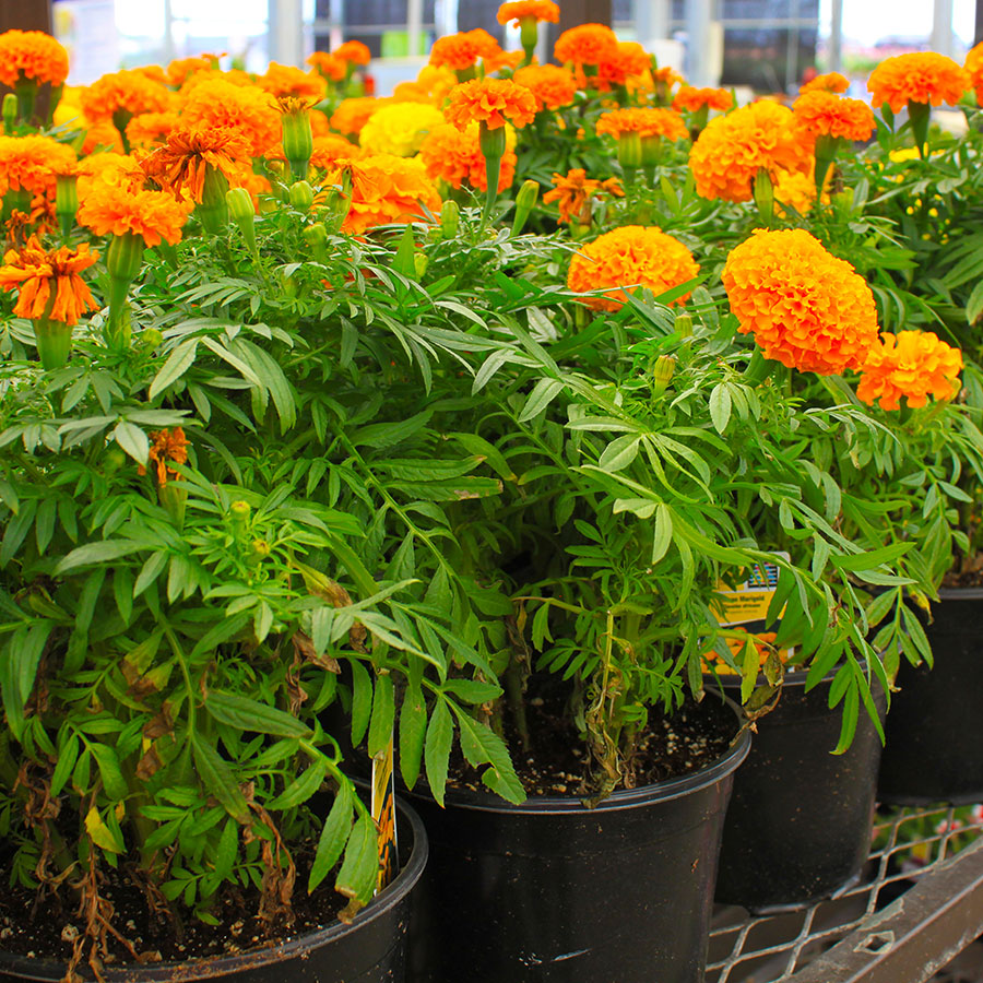 substrati di coltivazione e terricci per rinvaso in floricoltura