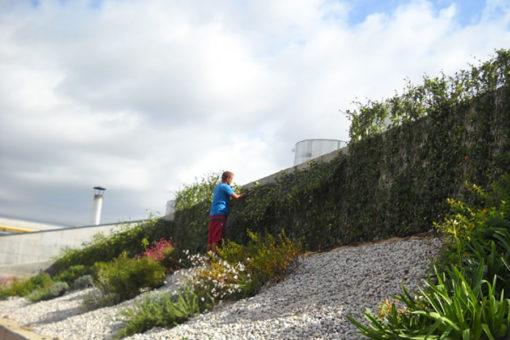 copertura verde Perliroof con erbacee perenni e tappezzanti - Ospedale di Careggi (FI)