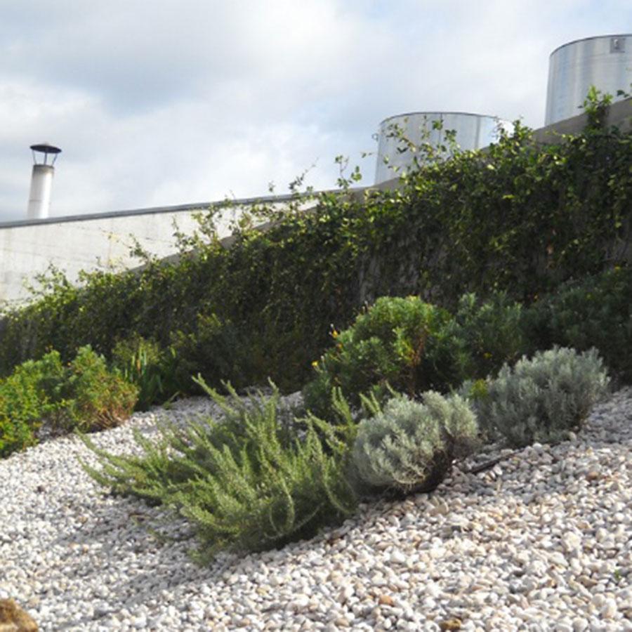 Perliroof giardini pensili copertura verde estensivo macchia mediterranea erbacee perenni