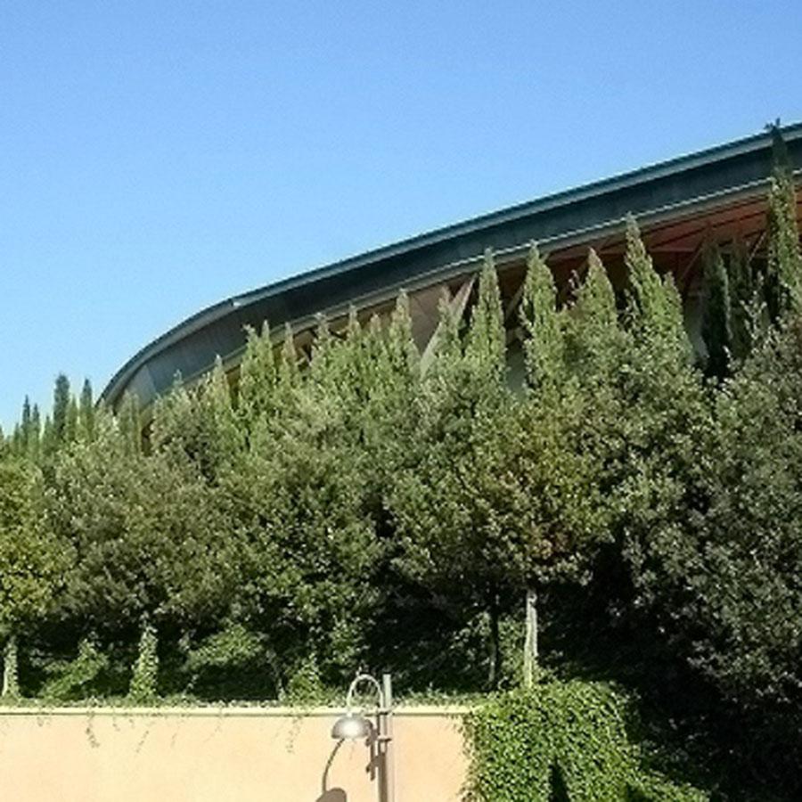 Perliroof giardini pensili intensivi vegetazione alberi I grandezza