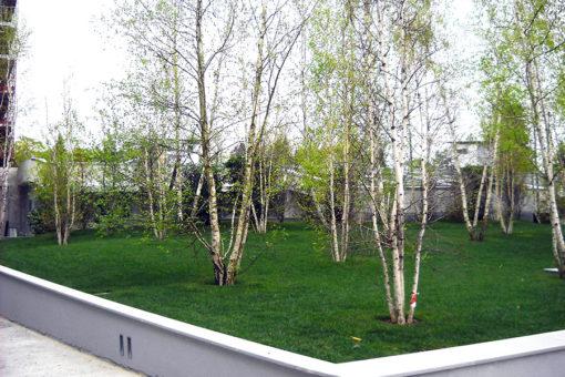 giardino pensile intensivo a prato e alberi realizzato con sistema Perliroof - complesso residenziale - Varese