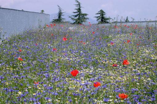 copertura a verde intensivo leggero con prato fiorito - polo tecnologico - Pordenone