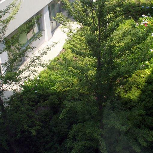 giardino intensivo con vegetazione ad arbusti e alberi - sistema Perliroof