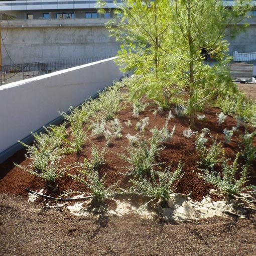 impianto di alberi in giardino pensile intensivo realizzato presso complesso residenziale - Trieste - sistema Perliroof