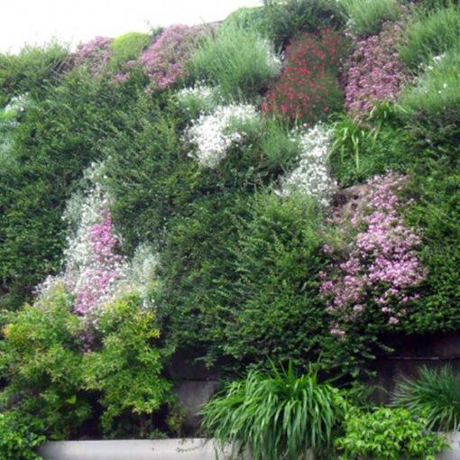 parete esterna inverdita con sistema per verde verticale Perliwall