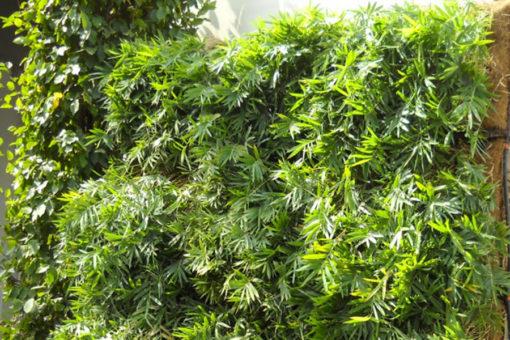 vegetazione bambu' su parete verde verticale realizzata su esterno con sistema Perliwall